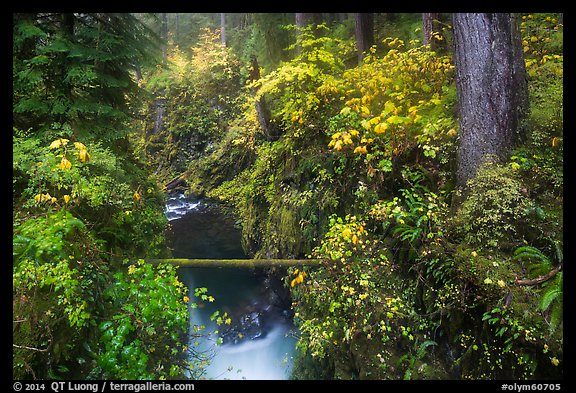 Narrow gorge of the Soleduc river in autumn. Olympic National Park (color)
