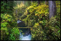 Narrow gorge of the Soleduc river in autumn. Olympic National Park ( color)