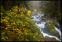 Sol Duc River in autumn. Olympic National Park ( color)