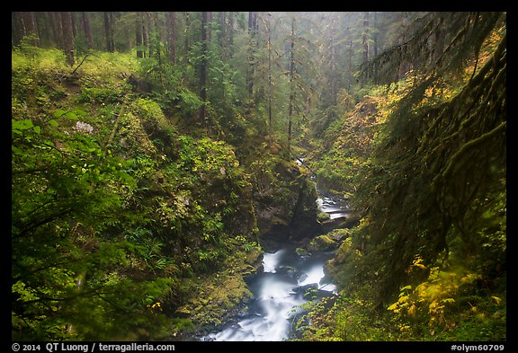 Gorge of Sol Duc River in autumn. Olympic National Park (color)