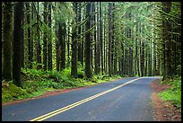 Road, Hoh Rain Forest. Olympic National Park ( color)