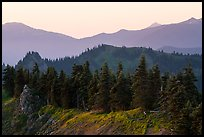 Forested ridge, Hurricane Hill. Olympic National Park ( color)