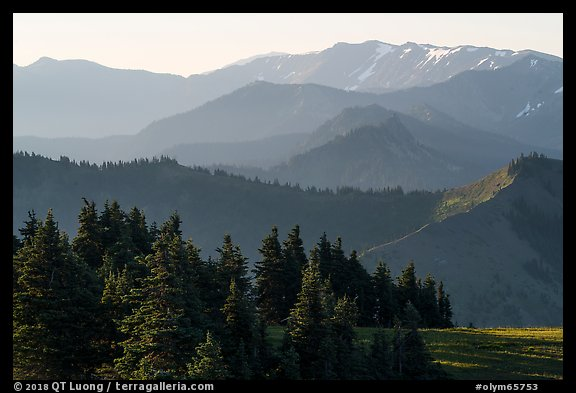 Olympic mountain ridges from Hurricane Hill, early morning. Olympic National Park (color)