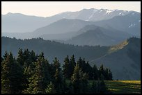 Olympic mountain ridges from Hurricane Hill, early morning. Olympic National Park ( color)