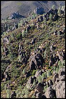 Slope with mediterranean chaparral and rock towers. Pinnacles National Park, California, USA. (color)
