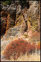 Dried wildflowers and colorful section of rock wall. Pinnacles National Park, California, USA. (color)