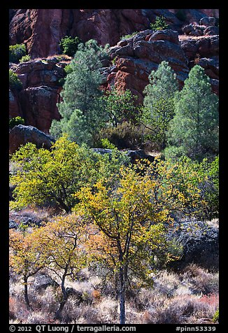 Trees and cliffs in late summer, Bear Gulch. Pinnacles National Park (color)