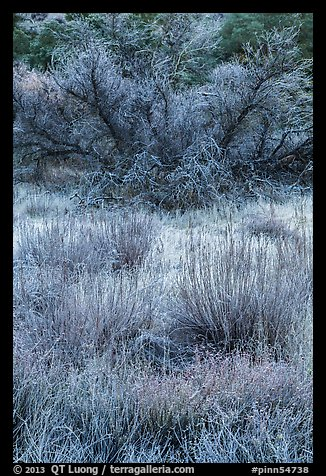 Frozen grasses and shrubs. Pinnacles National Park (color)