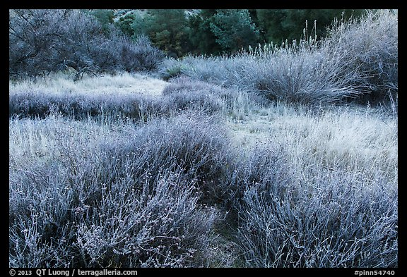 Winter frost on grasslands. Pinnacles National Park (color)