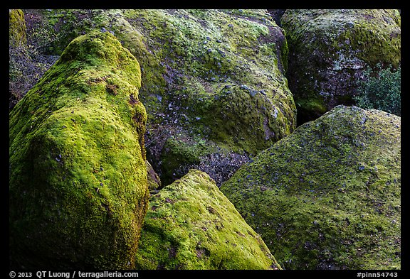 Moss-covered boulders, Bear Gulch. Pinnacles National Park (color)