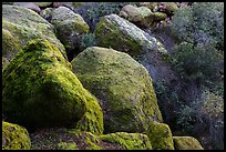 Boulders and trees in Bear Gulch. Pinnacles National Park, California, USA. (color)