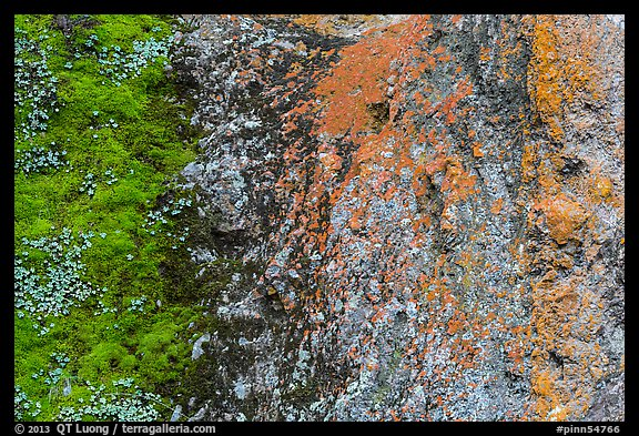 Green moss and orange lichen on rock wall. Pinnacles National Park (color)