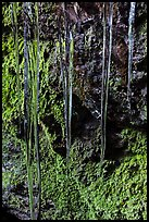 Icicles and mossy rocks, Balconies Caves. Pinnacles National Park, California, USA.
