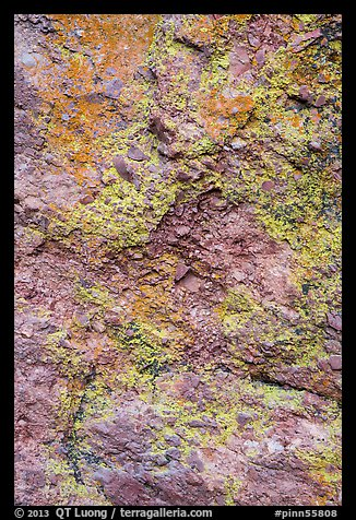 Colorful lichen and rock. Pinnacles National Park (color)