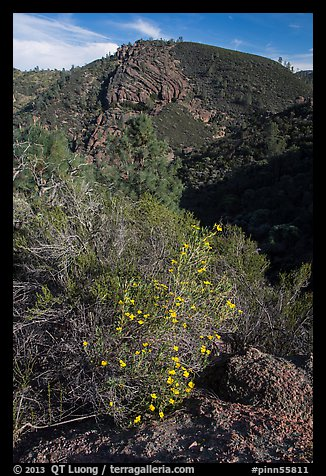 Bush in bloom and hill with rocks. Pinnacles National Park (color)