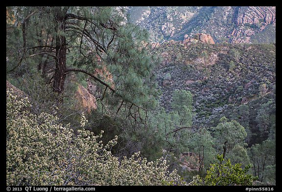 Manzanita blooms and valley with rock formations. Pinnacles National Park (color)