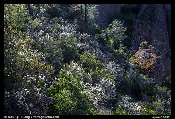 Slope with blooming shrubs in spring. Pinnacles National Park (color)