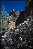 Blooming manzanita and high peaks. Pinnacles National Park, California, USA. (color)