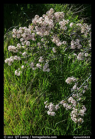 Close-up of spring blooms and grasses. Pinnacles National Park (color)