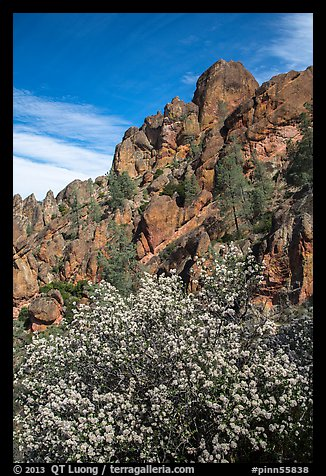 Spring blooms and high peaks from Juniper Canyon. Pinnacles National Park (color)