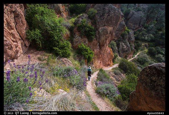 Hiker on trail in spring. Pinnacles National Park (color)