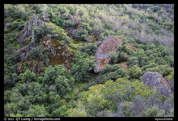 Hillside and rocks in spring. Pinnacles National Park (color)