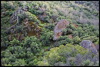 Hillside and rocks in spring. Pinnacles National Park ( color)