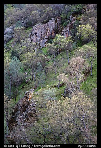 Hillside with trees and rocks in early spring. Pinnacles National Park (color)