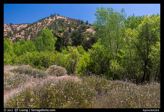 Wildflowers and riparian habitat in the spring. Pinnacles National Park (color)