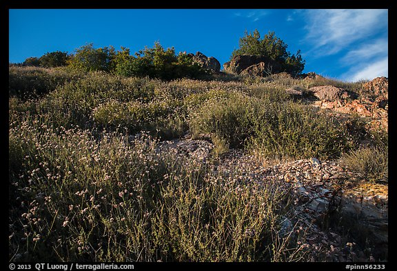 Flowers and rocks, South Chalone Peak. Pinnacles National Park (color)