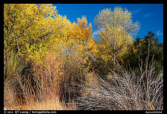 Shrubs and trees in autumn against blue sky, Bear Valley. Pinnacles National Park (color)