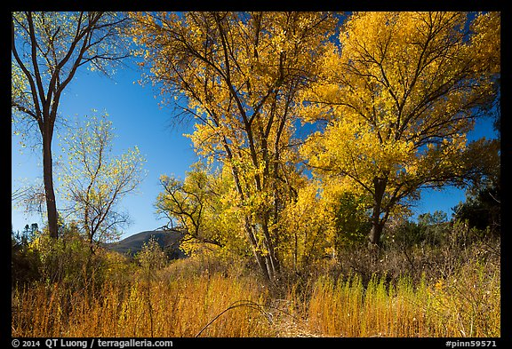 Autumn landscape with brighly colored trees. Pinnacles National Park (color)