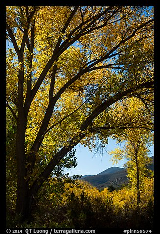 Hills framed by trees in autumn foliage. Pinnacles National Park (color)
