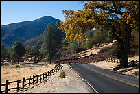 Bear Valley road in autumn. Pinnacles National Park ( color)
