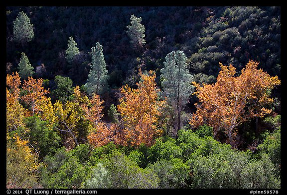 Evergreens and deciduous trees in fall foliage along Bear Gulch. Pinnacles National Park (color)