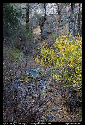 Shrubs and rocks along Dry Chalone Creek bed in autumn. Pinnacles National Park (color)