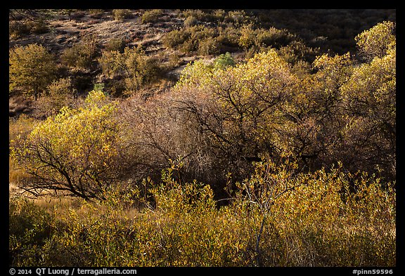Fall foliage on creek and hill near Balconies. Pinnacles National Park (color)
