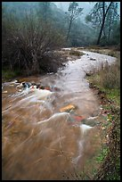 Chalone Creek flowing fast on rainy day. Pinnacles National Park ( color)