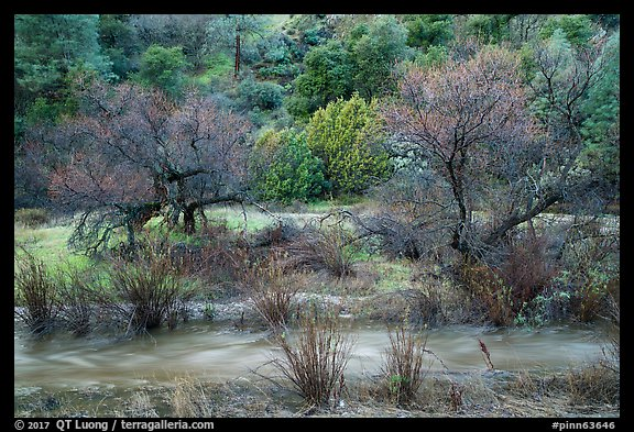 Chalone Creek with winter flow. Pinnacles National Park (color)