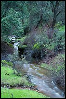 Bear Creek flowing. Pinnacles National Park ( color)