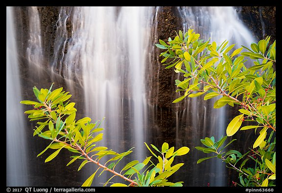 Leaves and Bear Gulch Reservoir waterfall. Pinnacles National Park (color)