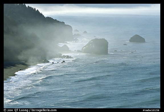 Morning mist on coast. Redwood National Park (color)