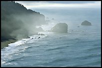 Morning mist on coast. Redwood National Park, California, USA. (color)