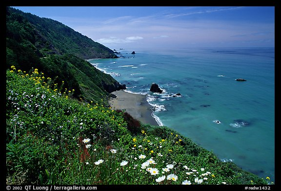 Wildflowers and Enderts Beach. Redwood National Park (color)