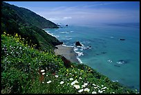 Wildflowers and Enderts Beach. Redwood National Park, California, USA.