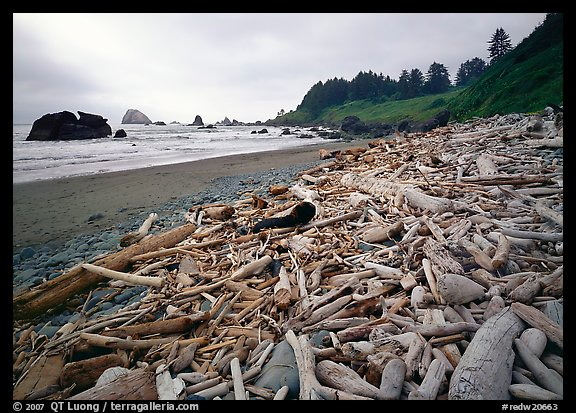 Driftwood, Hidden Beach. Redwood National Park (color)