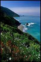Wildflowers and Enderts Beach. Redwood National Park, California, USA. (color)
