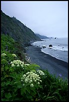 Wildflowers and beach with black sand in foggy weather, Del Norte Coast Redwoods State Park. Redwood National Park, California, USA.