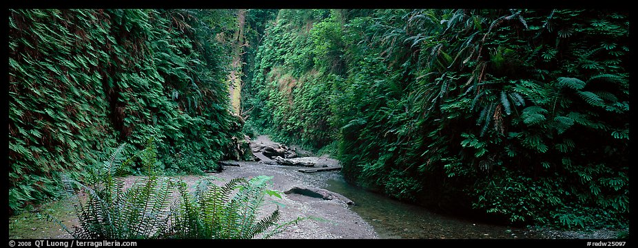 Gorge with fern-covered walls. Redwood National Park (color)