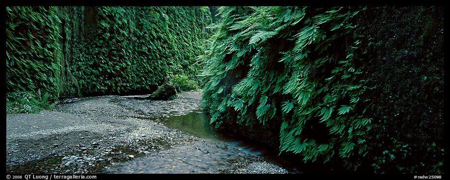 Stream in Fern Canyon. Redwood National Park (color)